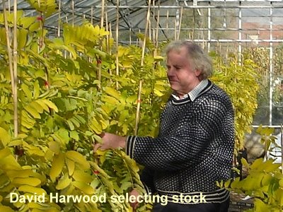 Native hedging supplied nationally