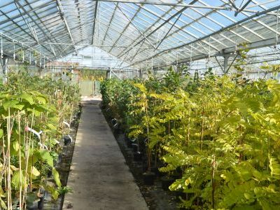 Young grafted trees at Sandy Lane Nursery.