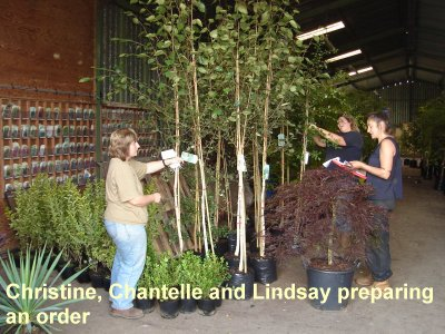 Wholesale container grown nursery stock - Sandy Lane Nursery